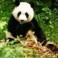 新中友好协会中国摄影之旅, 2015年9月