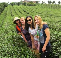 Linda, Carla, Karen 和 Kristina 在贵州省的一个茶场里尝试摘茶,2014年9月贵阳友谊论坛。 Carl和 Kristina 是尼尔森分会的会员