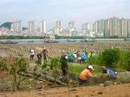 在厦门Longhai红树自然保护区种植的一天